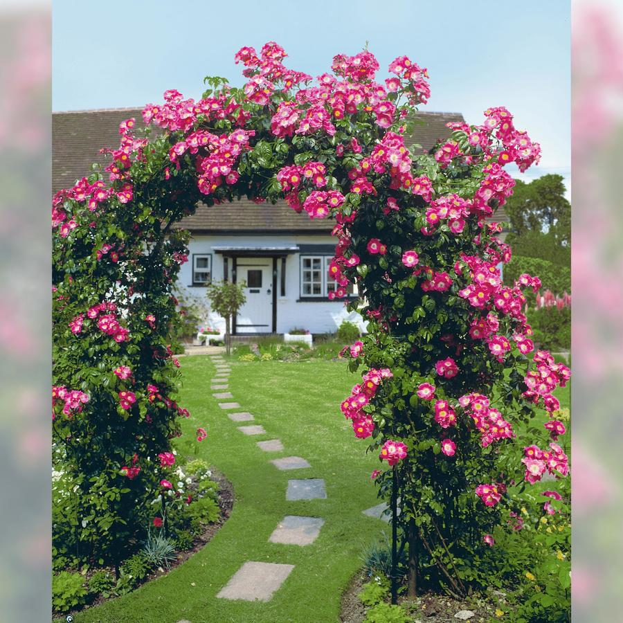 rosenbogen classic gr e 2 rosenb gen obelisken beckmann kg ihr spezialist f r. Black Bedroom Furniture Sets. Home Design Ideas